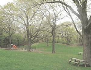 A playground and a picnic table in a wooded area